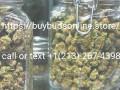 indoor-top-shelf-strains-small-0