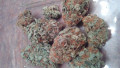 highest-quality-all-natural-medical-strains-available-text-1720-me-383-now-7352-small-1