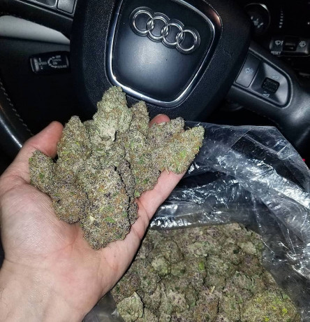 shelf-marijuana-available-at-discount-price-big-0
