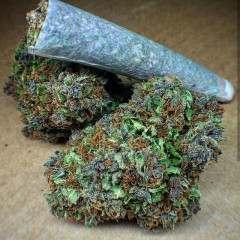 Trimmer and Bud tender wanted