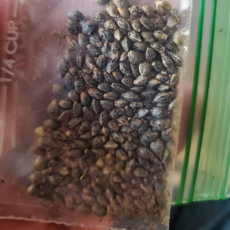 topshelf-high-grade-seeds-aaa-batteries-available-at-affordable-tickets-big-0