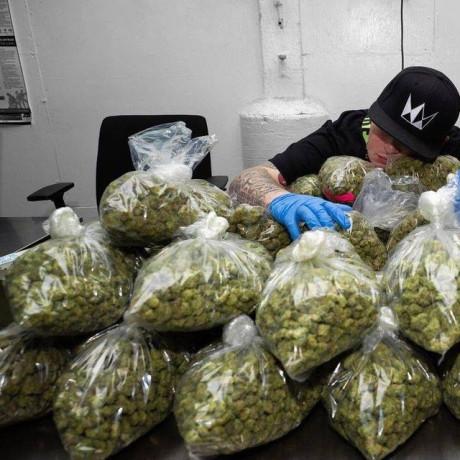 top-grade-weed-and-psychedelics-big-0
