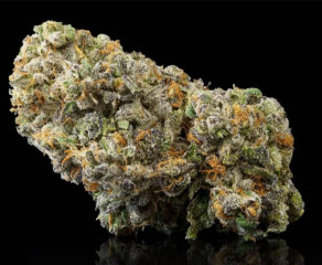 TOP QUALITY INDOOR BUDS AVAILABLE AT VERY AFFORDABLE PRICE.
