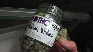 DTHC Dispensary Front Store. Bud/MMJ-Seeds Available