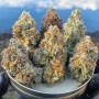 buy-quality-cannabis-strains-at-good-prices-small-0