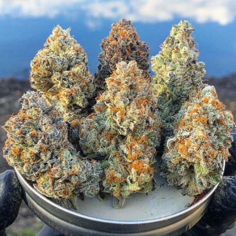 buy-quality-cannabis-strains-at-good-prices-big-0